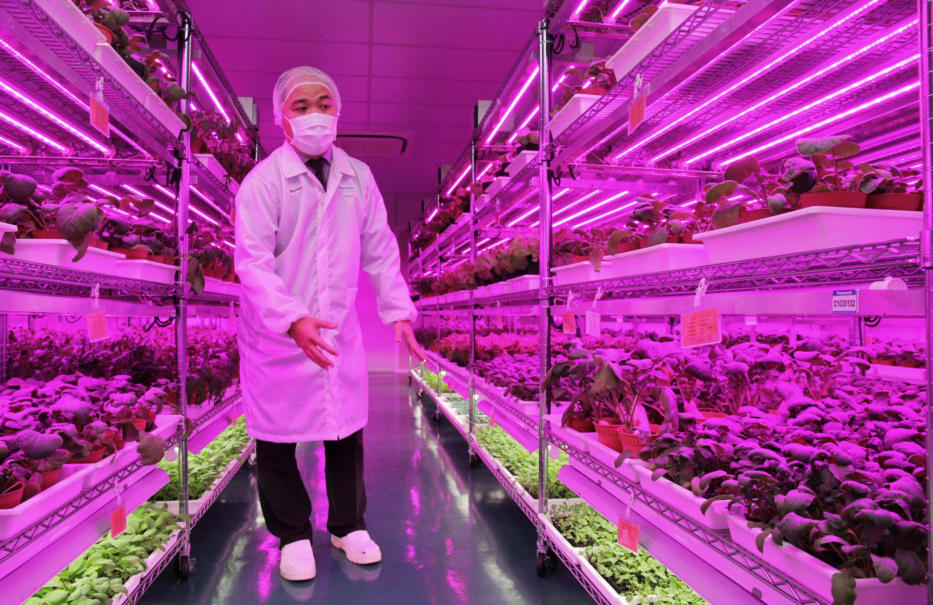 パナソニックがシンガポールで「植物工場」:独自の技術で食糧生産に貢献 Agri In Asia
