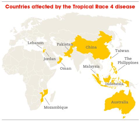 Banana-map-480