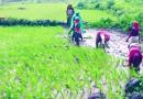 インド、農家の収入倍増は可能か?中国の事例と比較