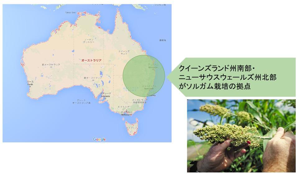 AustraliaChina_Agriculture_Sorghum_160515