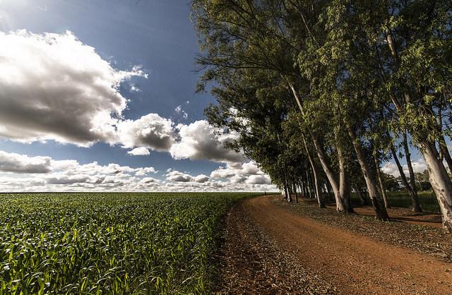 マット・グロッソ州   AGRI IN A...