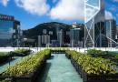 香港の都市農業:「雲耕一族」の屋上農園はコミュニティを育む
