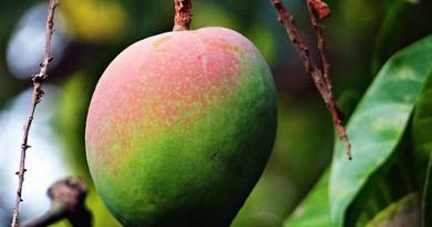 インドネシア:花卉・果物農業を育成する政府の目論見とは