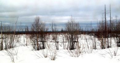 新たな農業市場 極東ロシア