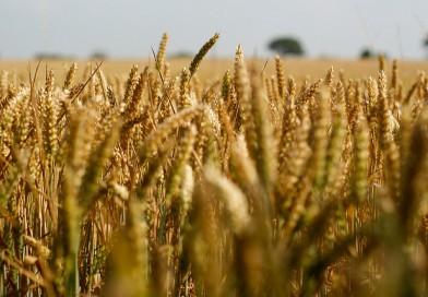 三井物産、モンサントから農薬「Latitude」のグローバル事業を買収