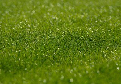 アサヒグループ・ビール酵母を活用した農業肥料開発の新会社設立