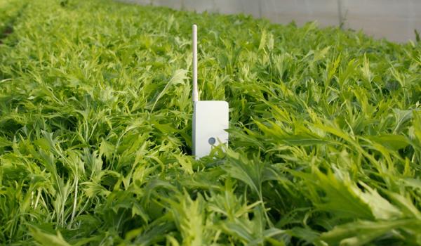 IoT で栽培ノウハウを低コストにデータ化する農業用センサーシステム「SenSprout Pro」発売