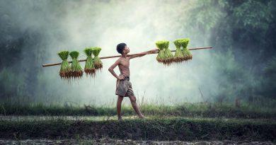 カンボジア農業経済特区の開発に向けて中国系企業がさらなる資金調達