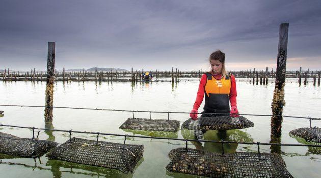 ミクロ環境センシングの The Yeild、牡蠣養殖支援サービスからボッシュと組み農業分野へ進出